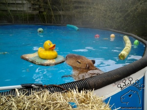 I love my rubber ducky.