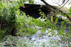 Ponte do capivara