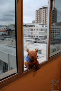 Capycoppy checks out the view