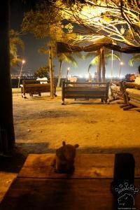 urban capivaras at night