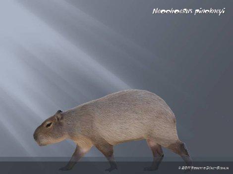 Neochoerus pinkneyi