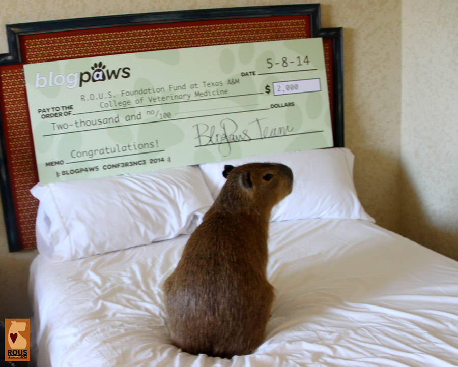 Thank you, Mia, for being such a good capybara ambassador!